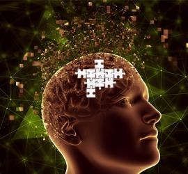 Cerebro, Puzzle