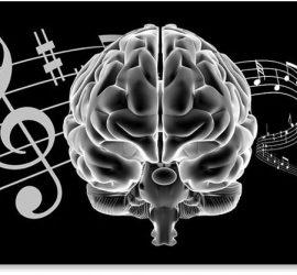 Cerebro, Pentagrama musical